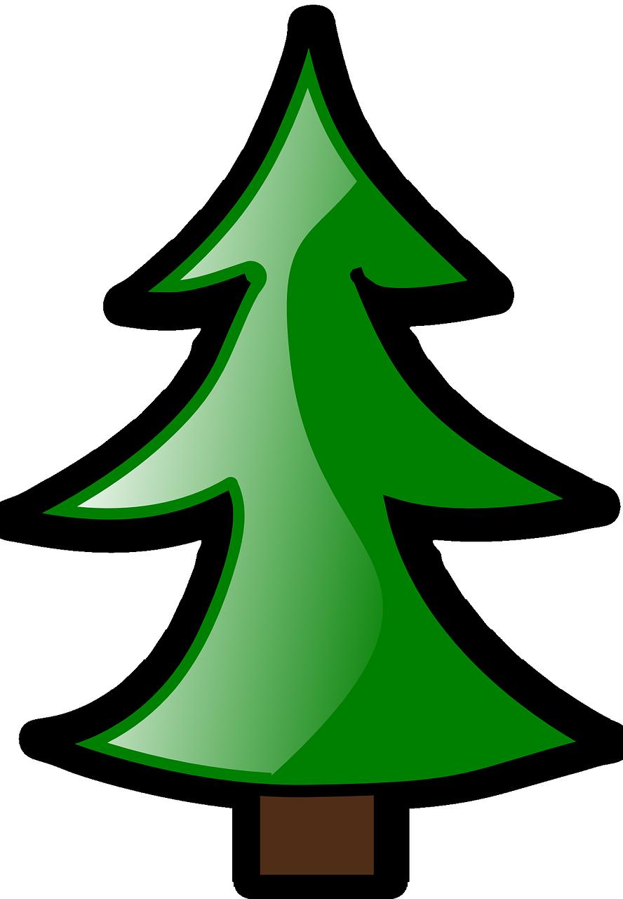 conifer-152063_1280