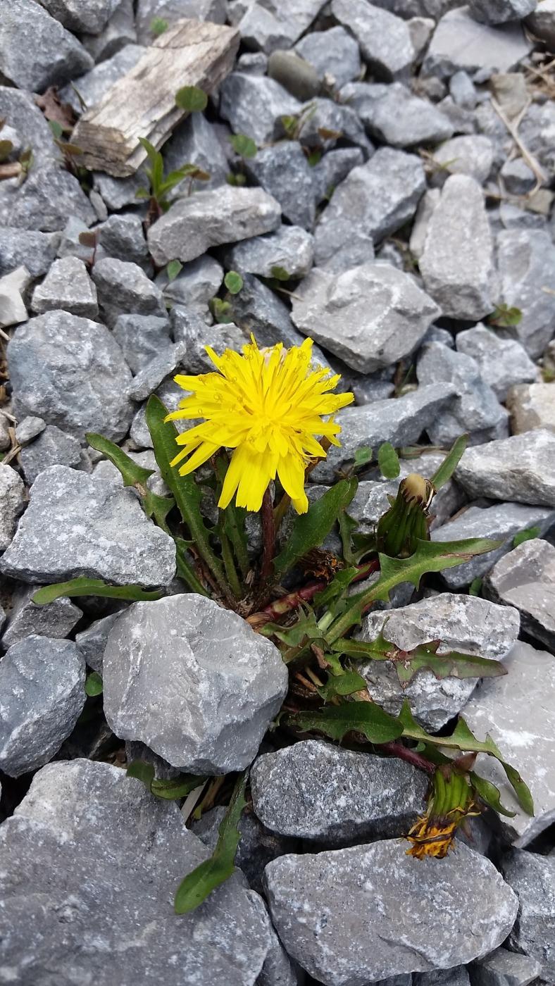 flower-1732498_1920
