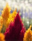 blossom-1401810_640