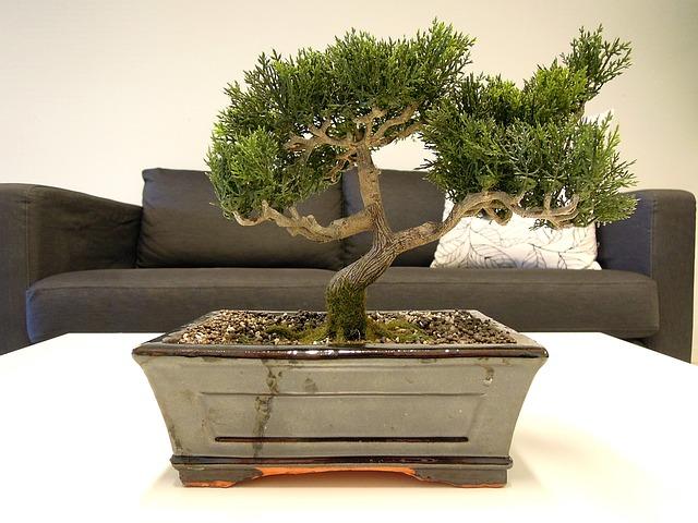 bonsai-1269216_640